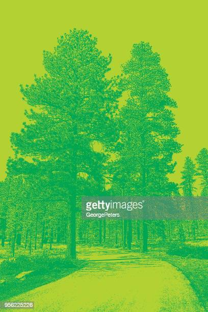 dirt road with ponderosa pines. bryce canyon national park. - ponderosa pine tree stock illustrations, clip art, cartoons, & icons