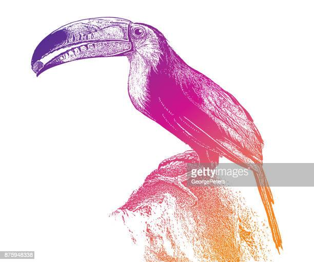 discovering mexico. colorful toucan eating fruit in the mayan riviera - toucan stock illustrations