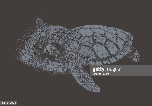 discovering mexico. young green turtle - green turtle stock illustrations, clip art, cartoons, & icons