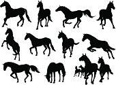 A display of horse icons in different positions of running