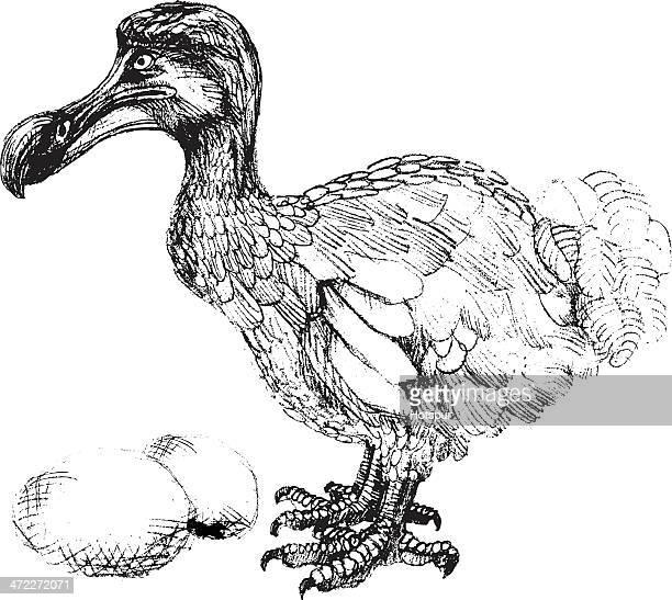ilustrações, clipart, desenhos animados e ícones de com ovo de dodô desenho de pássaros - ilhas maurício