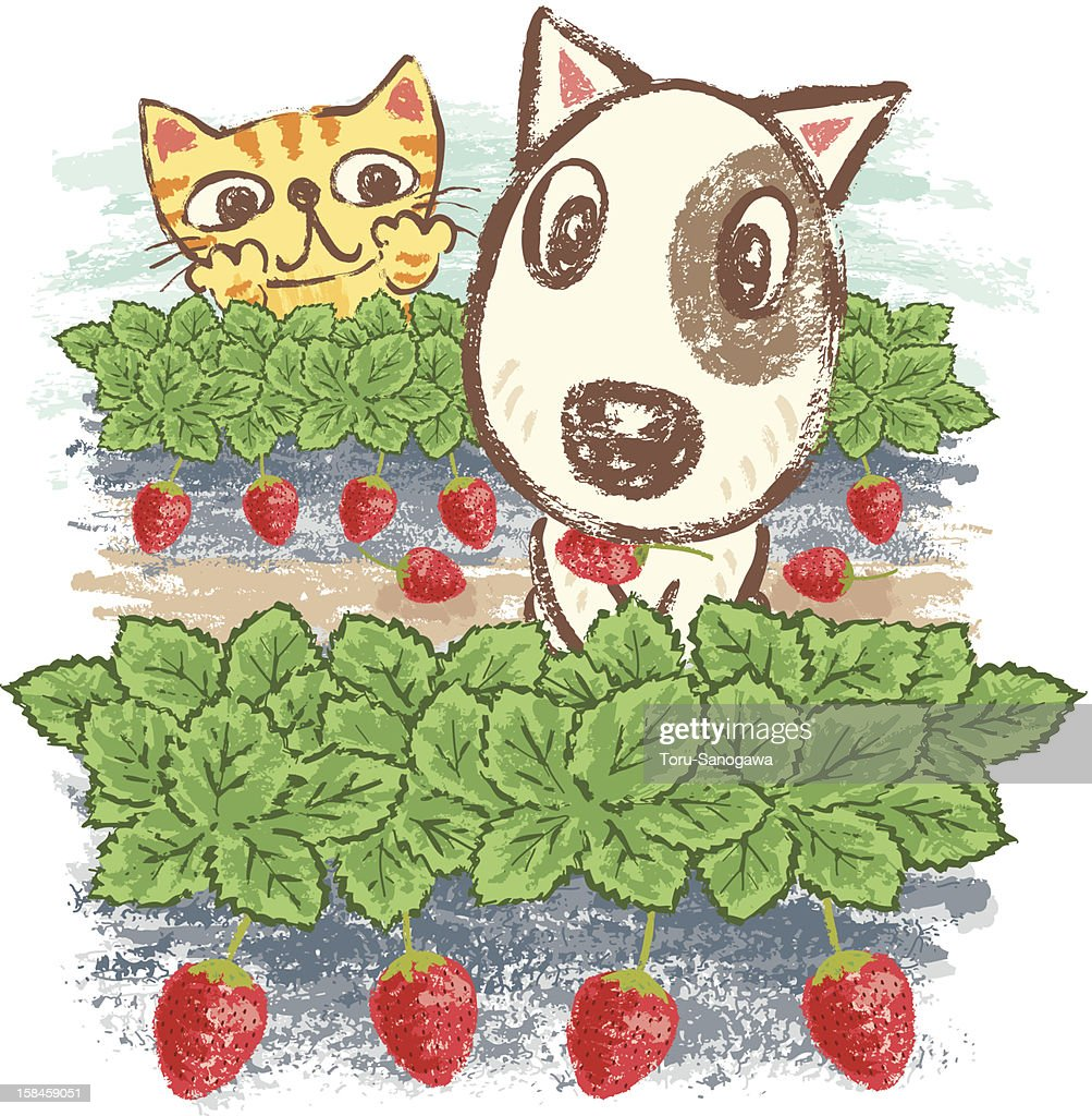 Dog and cat in strawberry field