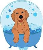 Dog bath color vector illustration