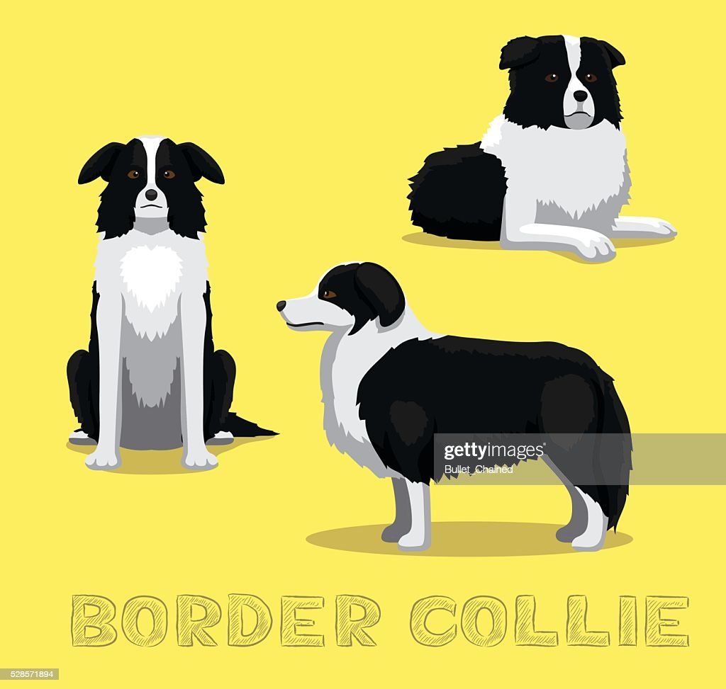 Dog Border Collie Cartoon Vector Illustration