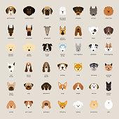 Dog Breeds, Head Set