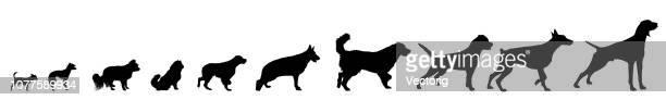 ilustraciones, imágenes clip art, dibujos animados e iconos de stock de perro razas silueta conjunto - galgo