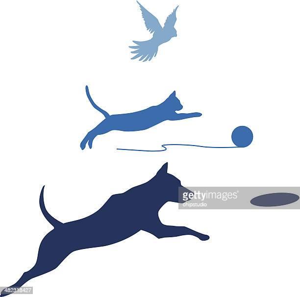 Oiseau chat chien saut