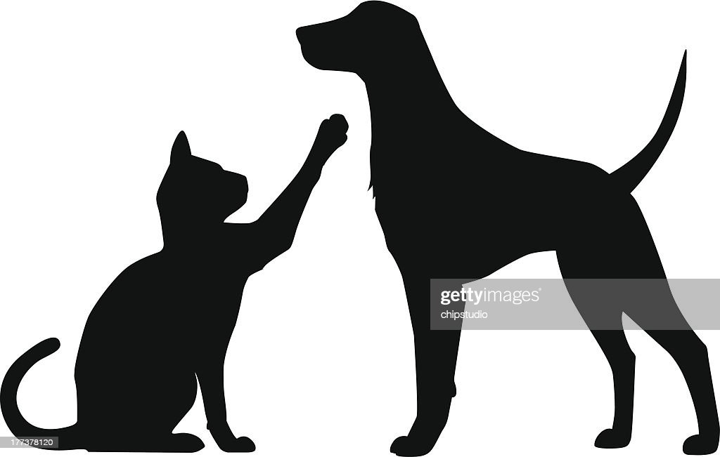 Dog Cat Play