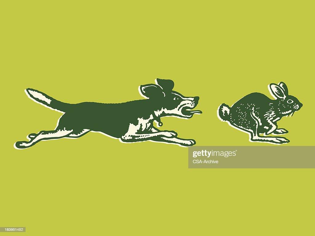 Dog Chasing a Rabbit