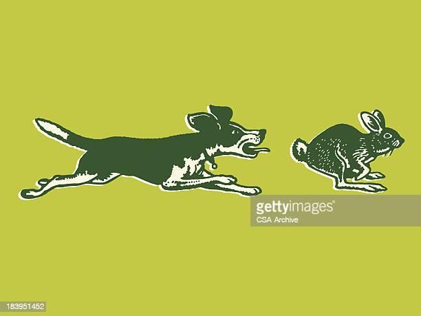 Hund verfolgen ein Kaninchen