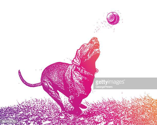 dog chasing ball - obsessive stock illustrations, clip art, cartoons, & icons