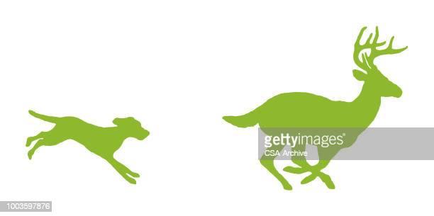 鹿を追いかける犬