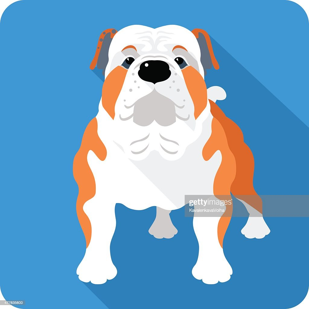 dog English Bulldog icon flat design