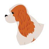 Dog head cavalier charles king spaniel