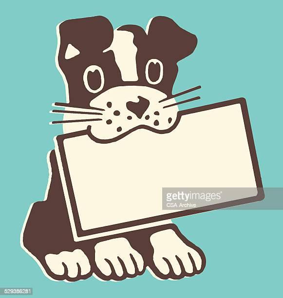 dog holding sign - boston terrier stock illustrations