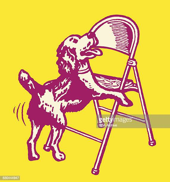 Dog Humping a Folding Chair