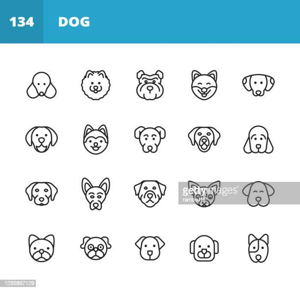 dog line icons. editable stroke. pixel perfect. for mobile and web. contains such icons as dog, puppy, pet, domestic animal, husky, labrador, pomeranian, pug, golden retriever, german shepherd, bulldog. - husky dog stock illustrations