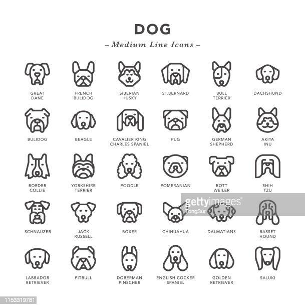 dog - medium line icons - dog stock illustrations