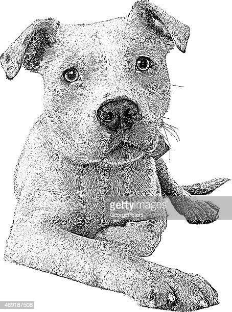 ilustraciones, imágenes clip art, dibujos animados e iconos de stock de perros. pit bull - pit bull terrier