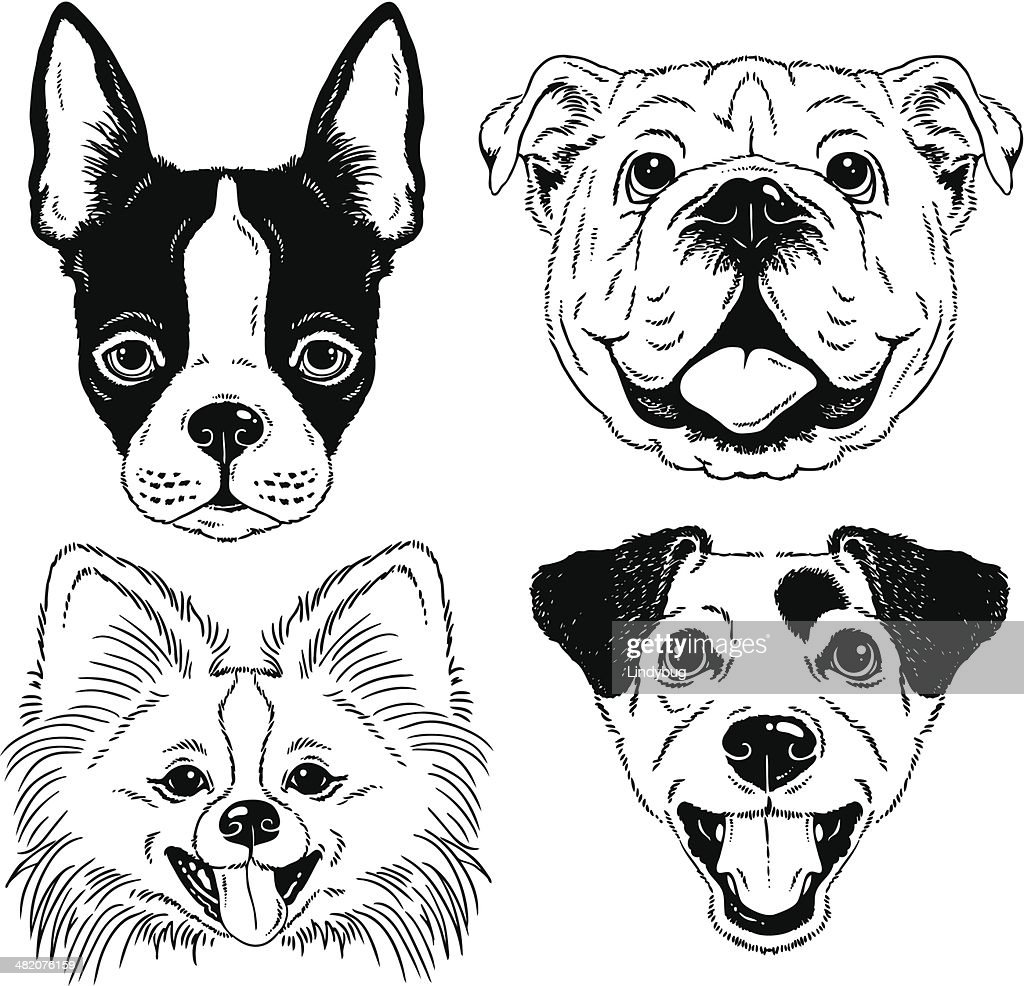 Dog portraits: Boston Terrier, English Bulldog, Pomeranian, Jack Russell