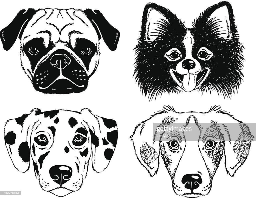 Dog portraits: Pug, Toy Pom, Dalmatian and a mutt