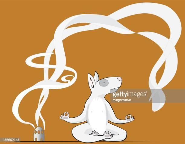 Perro practicando Yoga
