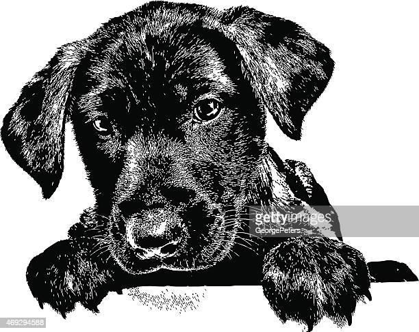 illustrazioni stock, clip art, cartoni animati e icone di tendenza di cane. cucciolo labrador, - testa di animale