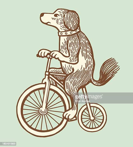 ilustrações, clipart, desenhos animados e ícones de cão em uma bicicleta - um animal