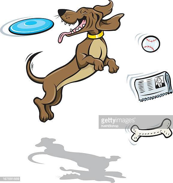 Dog Tricks-Catching Frisbee Disc, Bone, Newspaper, Ball