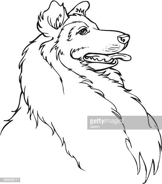 dog - collie stock illustrations