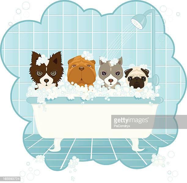 ilustraciones, imágenes clip art, dibujos animados e iconos de stock de perro de lavado - ducha