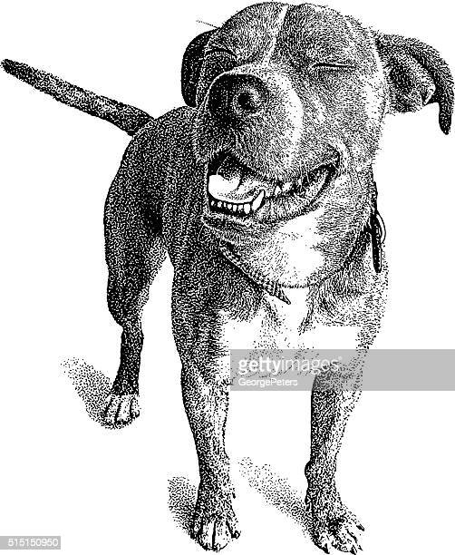 illustrations, cliparts, dessins animés et icônes de chien drôle d'expression. caleçon et bouledogue mélanger. - un seul animal