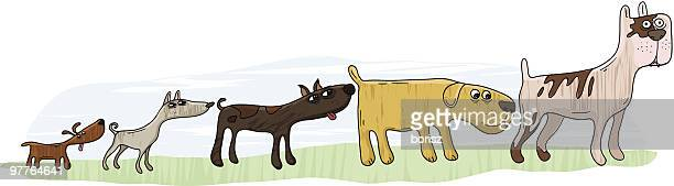 Doggie Line