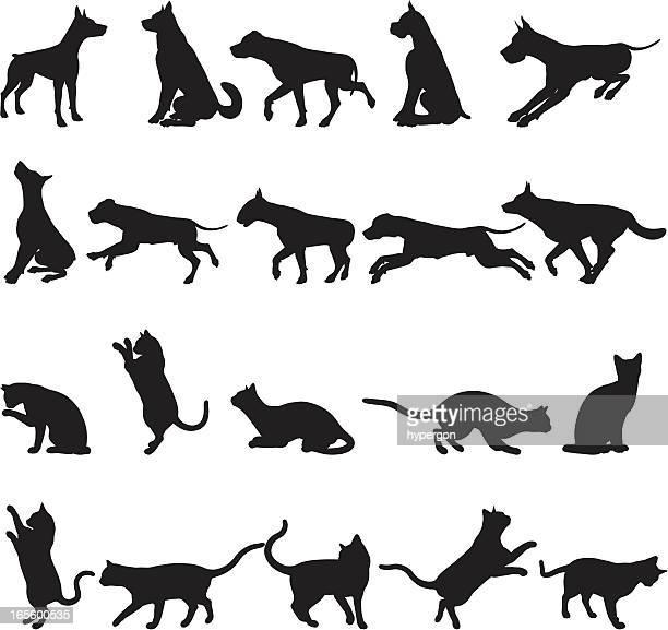 Les chiens et chats