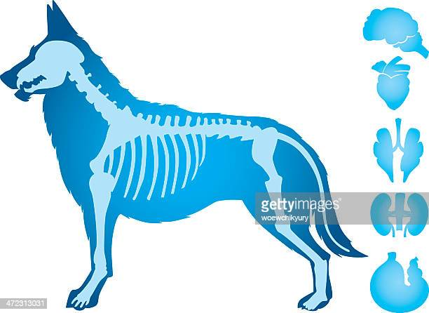 dogs body vector