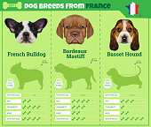 Dogs breed vector infographics types of dog breeds from France.