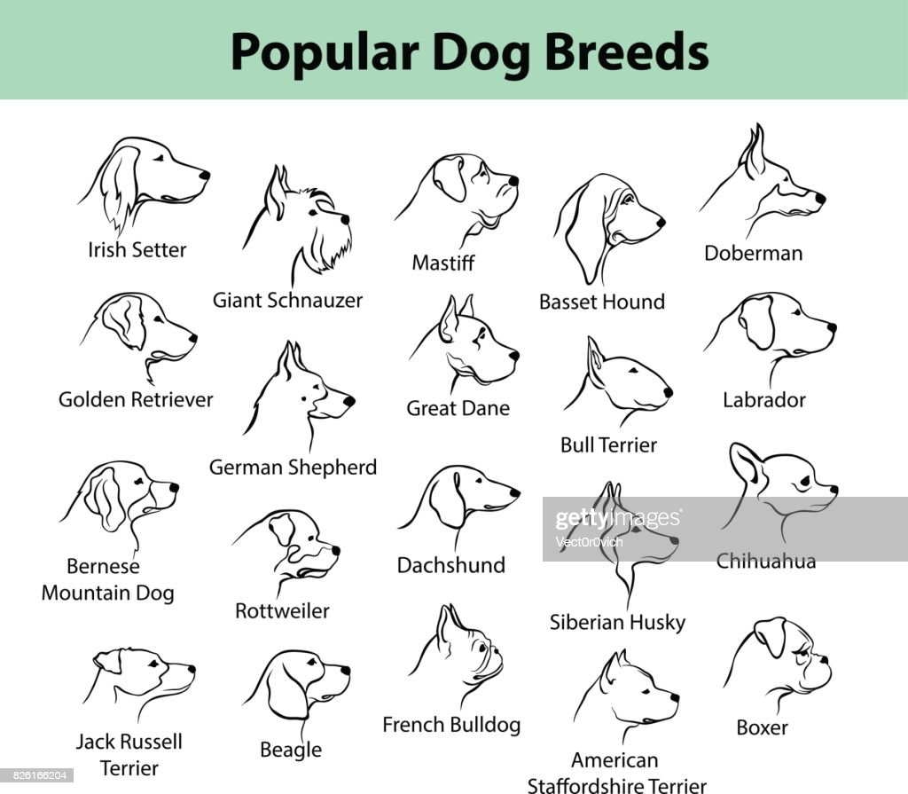 dogs breeds outline portraits, faces
