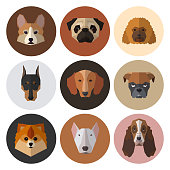 Dogs heads of different breeds.