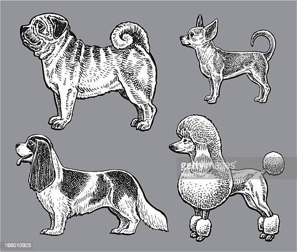 dogs - poodle, pug, chihuahua, king charles spaniel - spaniel stock illustrations