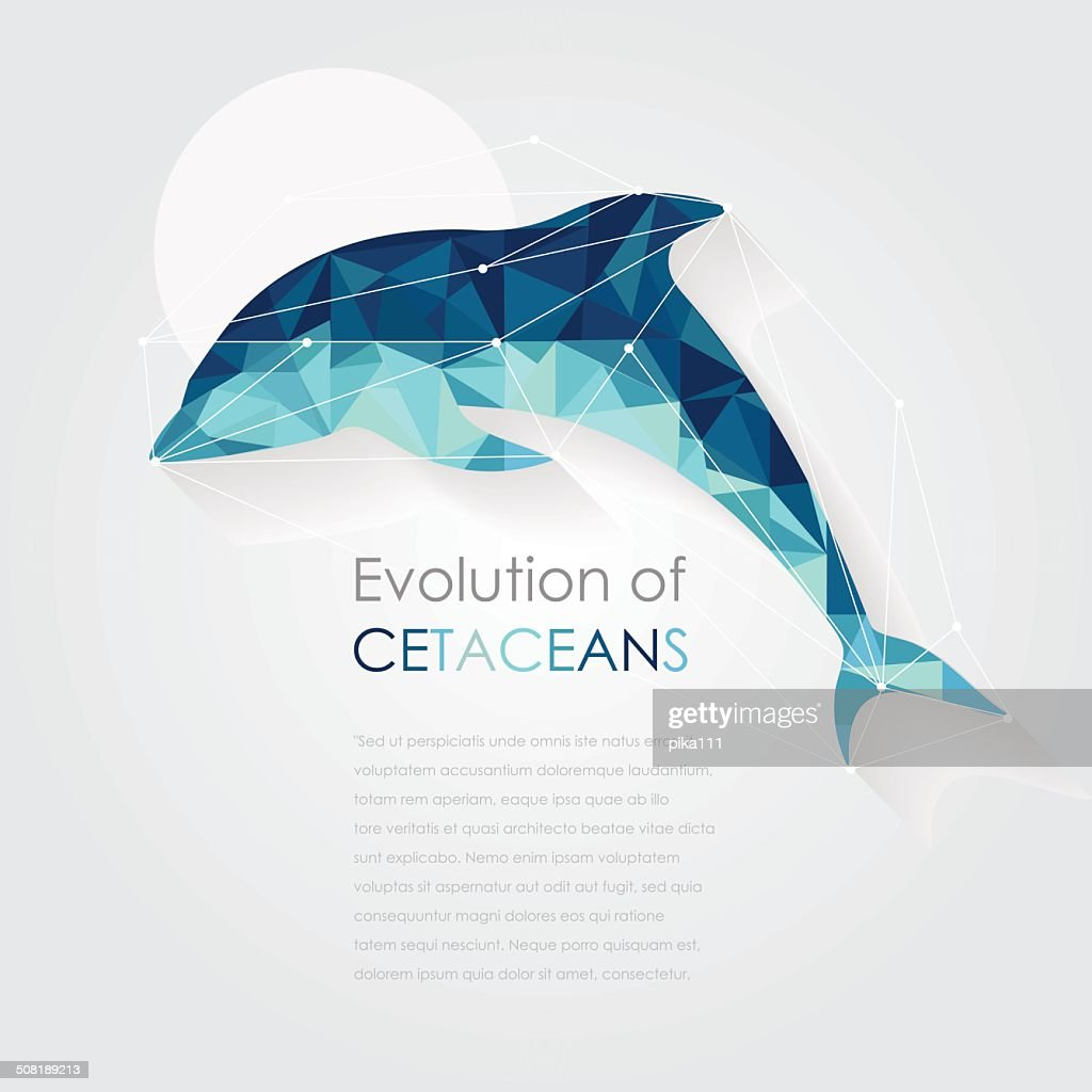 dolphin anatomy vector illustration in low poly art style