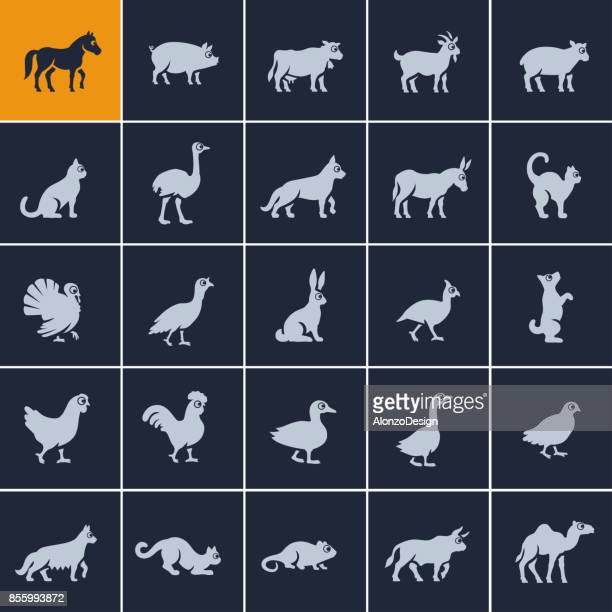 domestic animal icon set - quail bird stock illustrations, clip art, cartoons, & icons