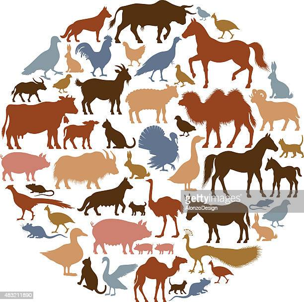 domestic animal silhouettes - ram animal stock illustrations, clip art, cartoons, & icons
