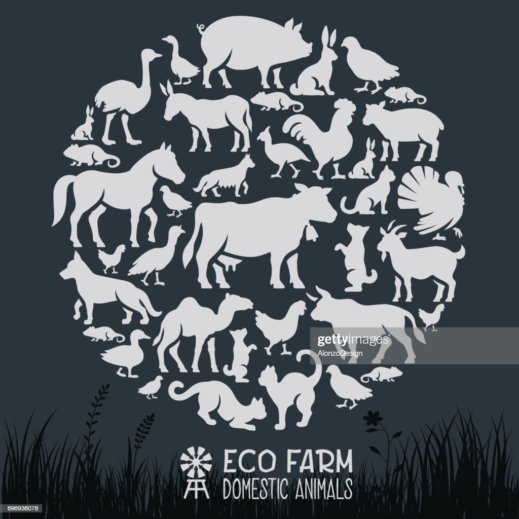 Domestic Animals Collage