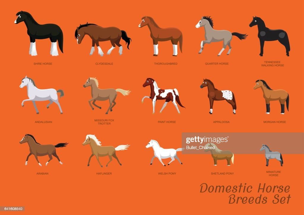 Domestic Horse Breeds Set Cartoon Vector Illustration