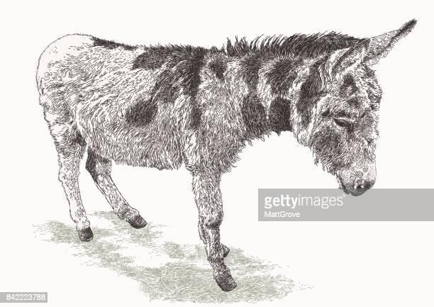 ilustraciones, imágenes clip art, dibujos animados e iconos de stock de burro - mula