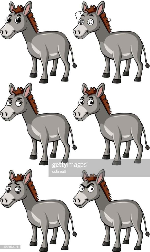 Donkey with different facial expressions