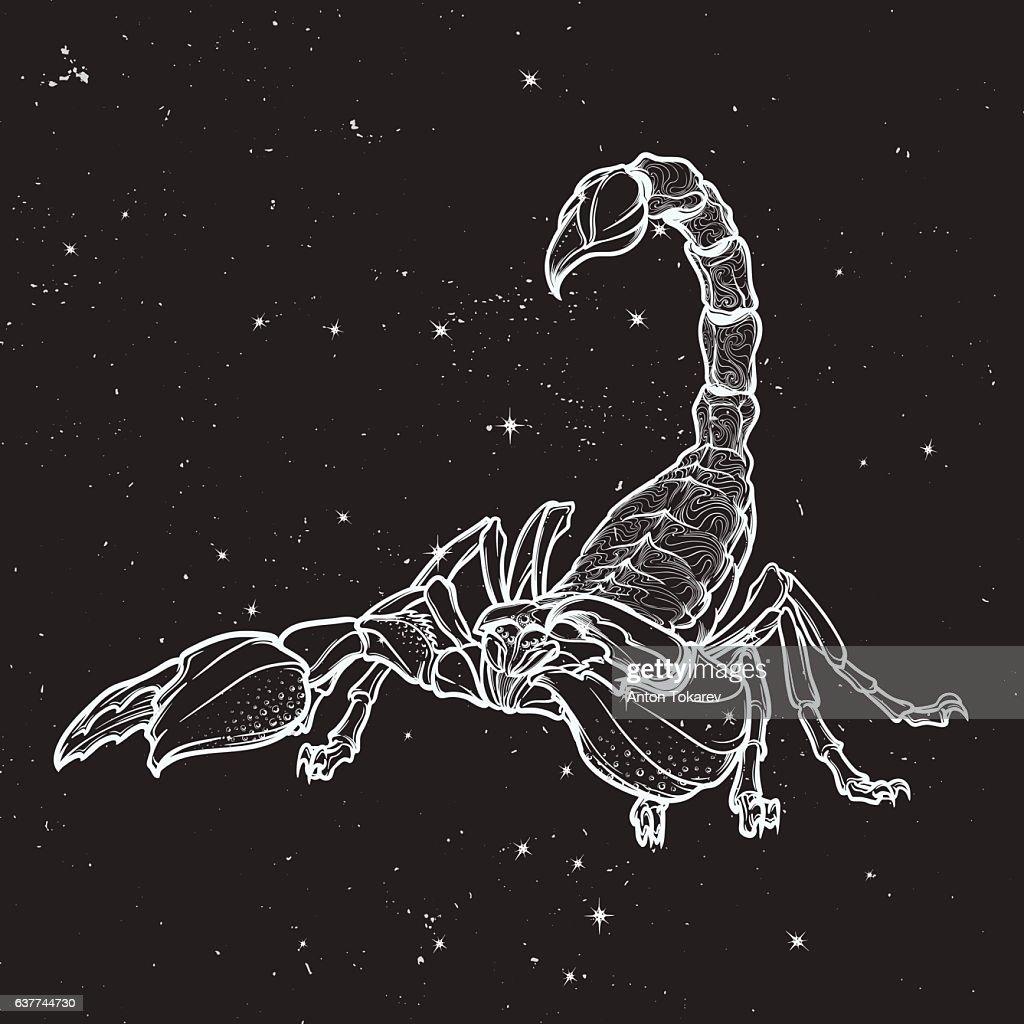Doodle stylized cartoon scorpio black sketch isolated on nightsky background
