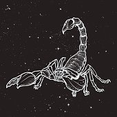 Doodle stylized cartoon scorpio black sketch isolated on nightsky background