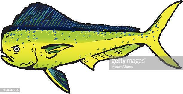 dorado sport fish - dolphin fish stock illustrations