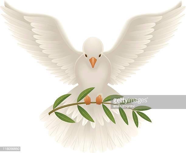 ilustraciones, imágenes clip art, dibujos animados e iconos de stock de dove con rama de olivo - paloma blanca
